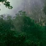 Alba nella Foresta del Borneo